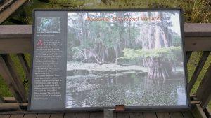 Wayside Swamp