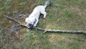 Nala and her stick