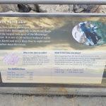 Lake Water Information