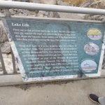 Lake Life Information